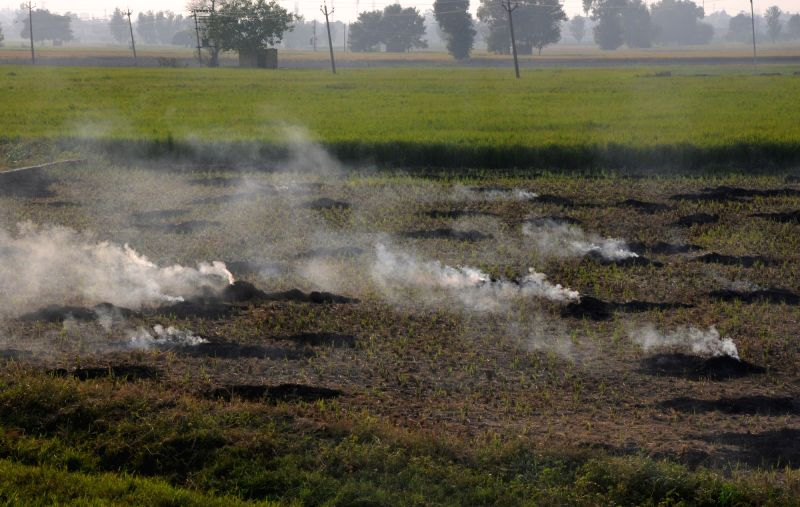 : Amritsar: Paddy stubble being burnt in a field on the outskirts of Amritsar, on Oct 12, 2018. (Photo: IANS).(Image Source: IANS)