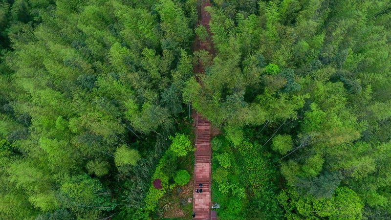 CHINA-GUIZHOU-CHISHUI-BAMBOO FOREST PARK