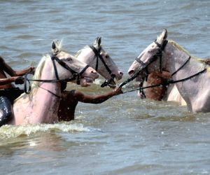 Horses take bath at Dadar beach