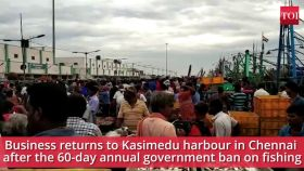 Chennai: Business returns to Kasimedu harbour after 60-day annual hiatus