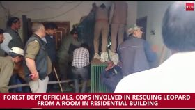 Leopard enters house in Dehradun, rescued after several hours