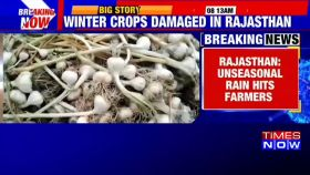 Unseasonal rains hit Rajasthan farmers, crops worth Rs 700cr damaged